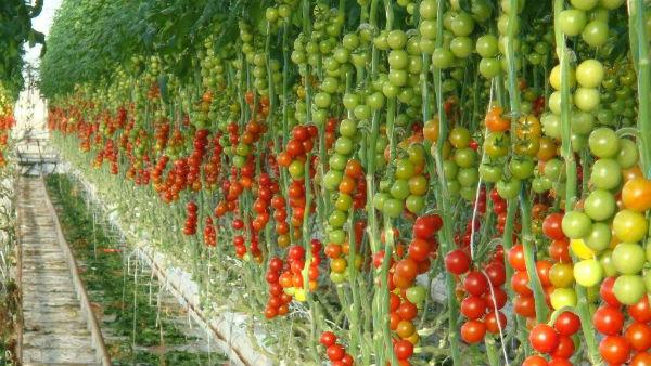 Сад и огород в Греции