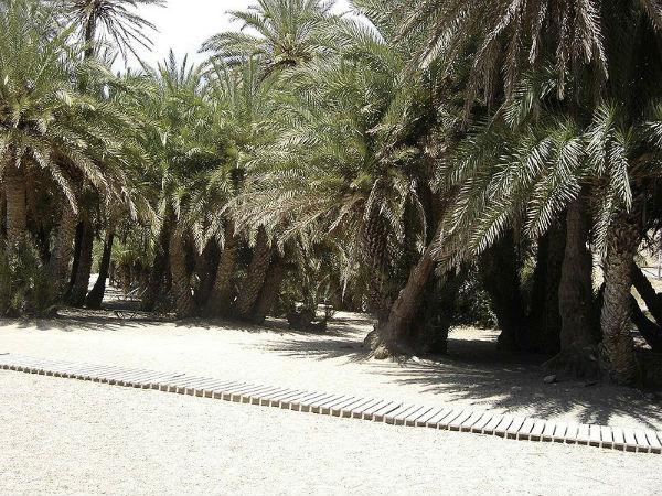 пальмовый лес Вай